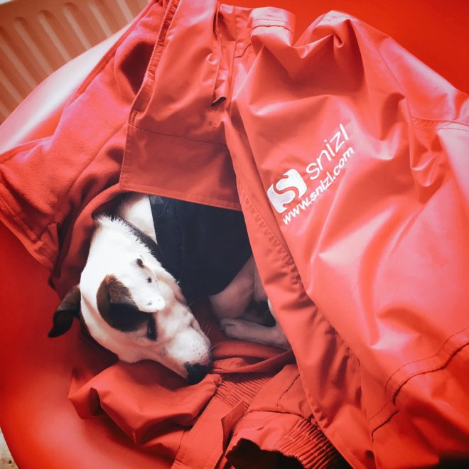dog in snizl jacket checking out dog friendly venues in nottingham
