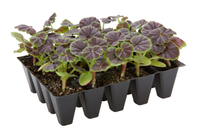 plug plants