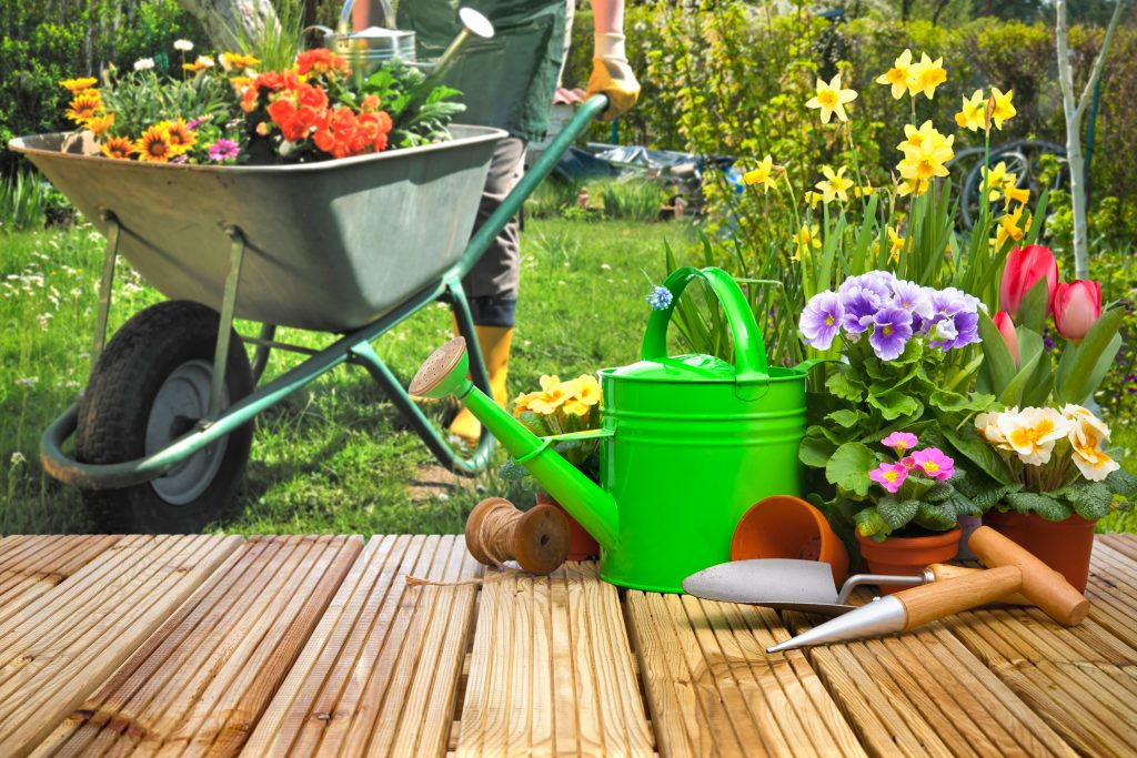 Wheel barrow full of plants and gardening supplies