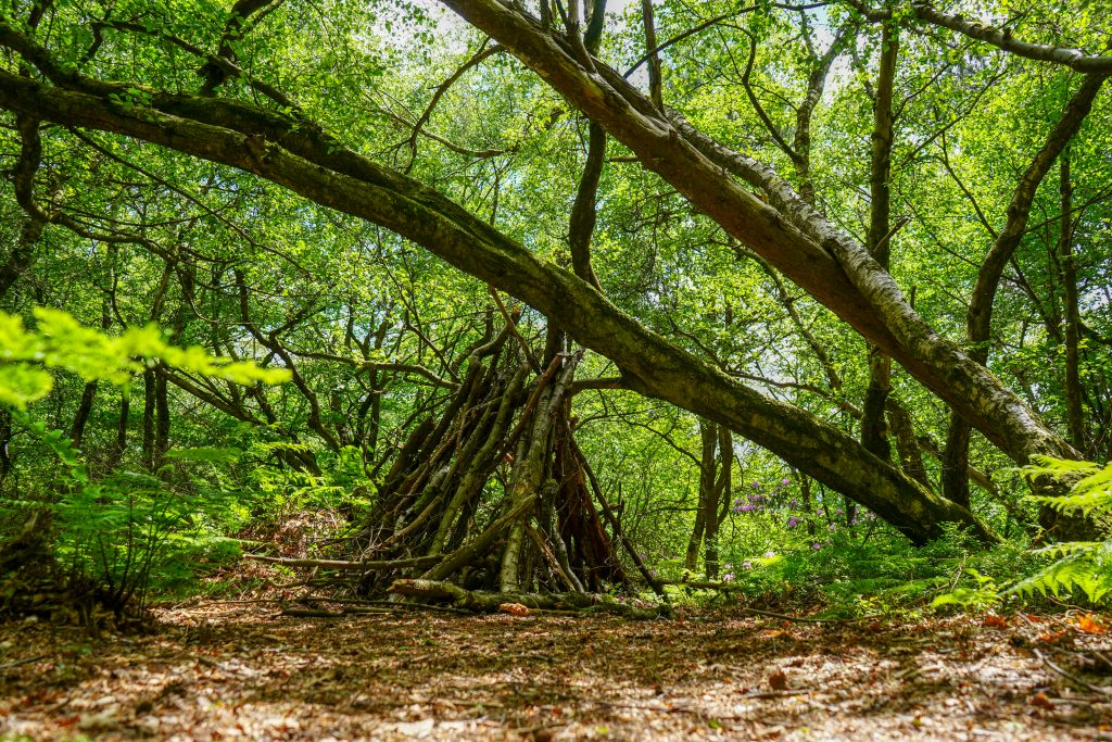 Create a den in the woods. foraging and building are good skills to learn
